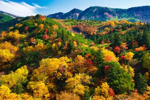 十勝岳の紅葉の写真素材 [FYI03154740]