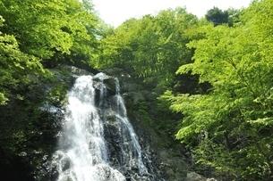 原小屋沢の雷滝の写真素材 [FYI03154762]