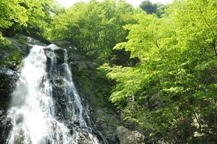 原小屋沢の雷滝の写真素材 [FYI03154763]