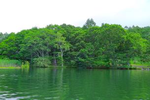 水辺の森の写真素材 [FYI03155014]