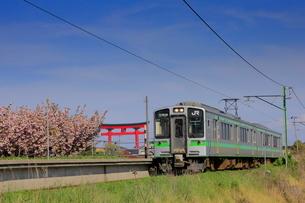弥彦線のE127系電車と大鳥居の写真素材 [FYI03155022]