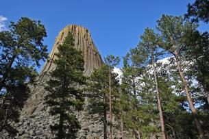 米ワイオミング州デヴィルズタワー国定公園のデヴィルズタワーを針葉樹の木々の間から見上げた風景の写真素材 [FYI03155167]
