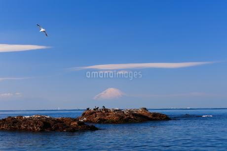 富士山と海とカモメの写真素材 [FYI03155316]