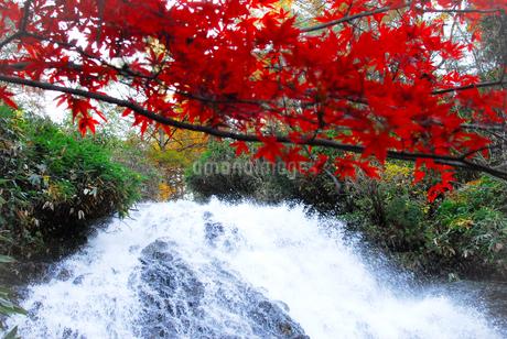 七滝の清流と真赤な紅葉の写真素材 [FYI03155378]