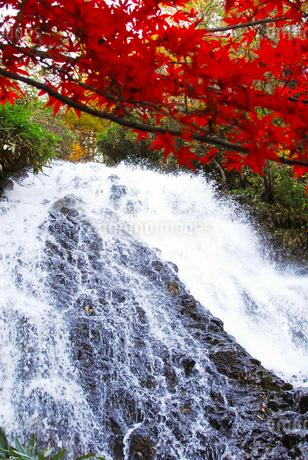 七滝の清流と真赤な紅葉の写真素材 [FYI03155379]