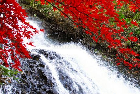 七滝の真赤な紅葉の写真素材 [FYI03155380]