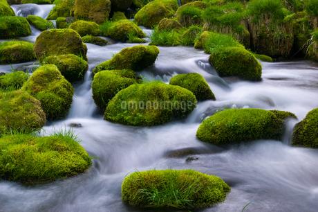 奥大山 日本 鳥取県 江府町の写真素材 [FYI03155400]