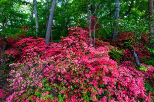大沼公園 日本 北海道 七飯町の写真素材 [FYI03155409]