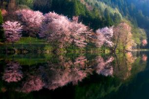 中綱湖 長野県 大町市の写真素材 [FYI03155463]