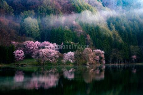 中綱湖 長野県 大町市の写真素材 [FYI03155464]