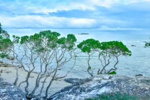 ニューカレドニア・ヌメアのオルフェリナ湾付近のビーチに生えている木と彼方に見える島の写真素材 [FYI03155646]