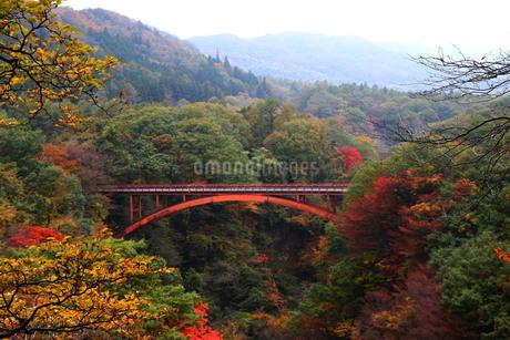 紅葉の雪割り橋渓谷の写真素材 [FYI03155763]