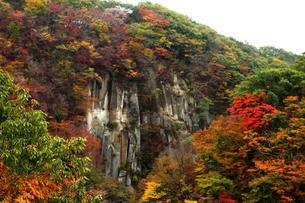 紅葉の雪割り橋渓谷の写真素材 [FYI03155764]