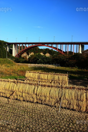 収穫の稲穂と那須高原大橋の写真素材 [FYI03155765]