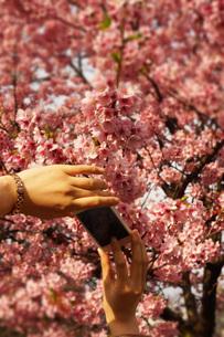 スマートフォンで桜の写真を撮る人の写真素材 [FYI03155807]