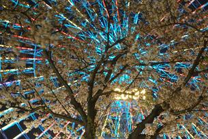 夜桜とコスモクロックの写真素材 [FYI03155860]