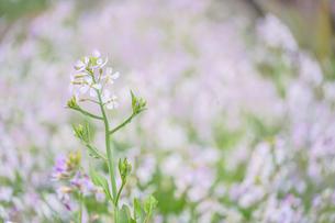 春の花畑の写真素材 [FYI03155930]