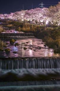 宮城野早川堤の桜の写真素材 [FYI03155951]