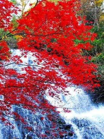 真赤な紅葉と七滝の清流の写真素材 [FYI03155994]