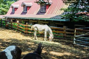 牧場の馬のイメージの写真素材 [FYI03156031]