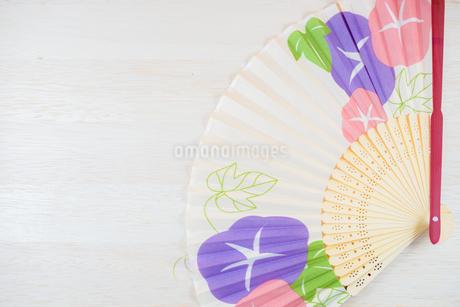 アサガオの絵が描かれた扇子の写真素材 [FYI03156046]