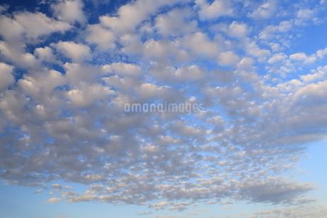 ひつじ雲の写真素材 [FYI03156393]