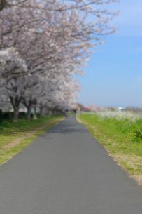 多摩川土手のサイクリングロードと満開の桜並木の写真素材 [FYI03156467]