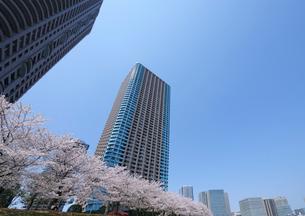 大川端リバーシティ21の高層タワーマンションと桜並木の写真素材 [FYI03156486]