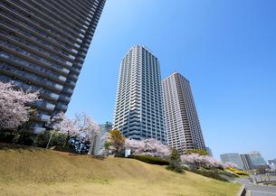 大川端リバーシティ21の高層タワーマンションと桜並木の写真素材 [FYI03156487]