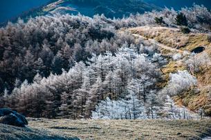 霧氷の樹林の写真素材 [FYI03156854]