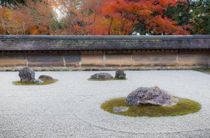 秋の龍安寺の庭園の写真素材 [FYI03156914]