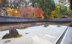 秋の龍安寺の庭園の写真素材 [FYI03156916]