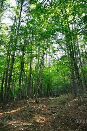 乾徳山の森の写真素材 [FYI03157114]