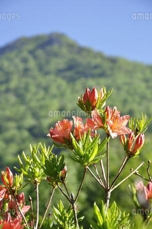 乾徳山にレンゲツツジの写真素材 [FYI03157131]