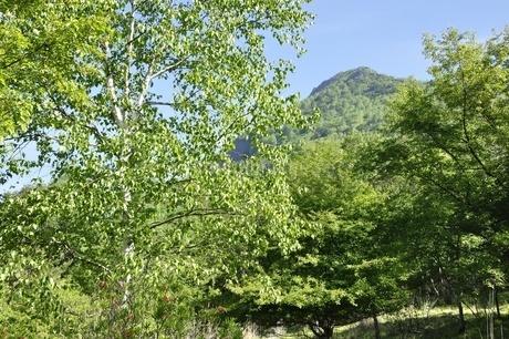 新緑のシラカンバと乾徳山の写真素材 [FYI03157135]