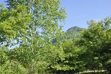 新緑のシラカンバと乾徳山の写真素材 [FYI03157136]