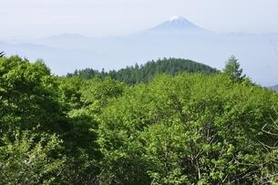 初夏の富士山遠望の写真素材 [FYI03157143]