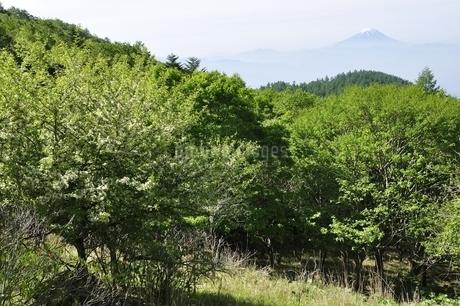初夏の富士山遠望の写真素材 [FYI03157144]