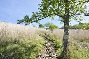 高原の道にブナ木立ちの写真素材 [FYI03157149]