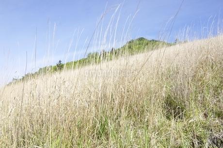 扇平のカヤトより望む乾徳山の写真素材 [FYI03157150]