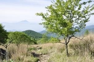 乾徳山の高原より望む富士山の写真素材 [FYI03157152]