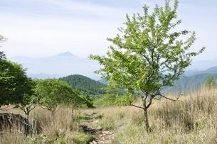 乾徳山の高原より望む富士山の写真素材 [FYI03157153]