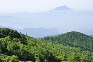 乾徳山より初夏の富士山遠望の写真素材 [FYI03157160]