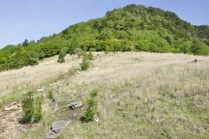 乾徳山と扇平のカヤト原の写真素材 [FYI03157165]