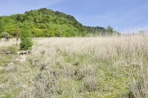乾徳山と扇平のカヤト原の写真素材 [FYI03157186]