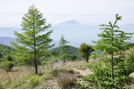 乾徳山の高原より富士山を望むの写真素材 [FYI03157190]