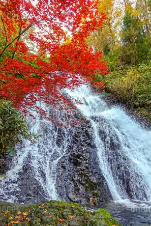 七滝の瀑布と真紅の紅葉の写真素材 [FYI03157239]