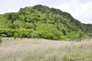 乾徳山の森の緑と扇平のカヤト原の写真素材 [FYI03157254]