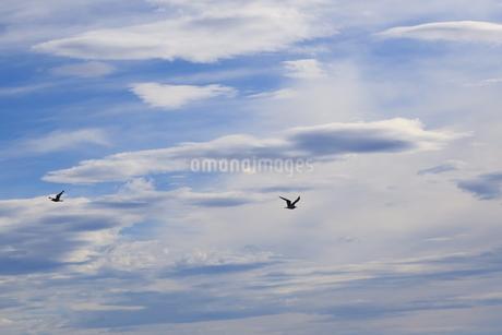 雲とカモメの写真素材 [FYI03157379]