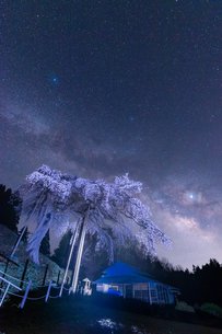 外大野のしだれ桜 日本 茨城県 大子町の写真素材 [FYI03157959]